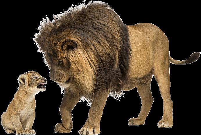 Löwen BTS