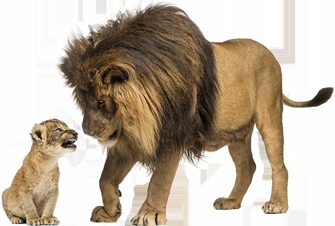 Löwen BTS Logistik